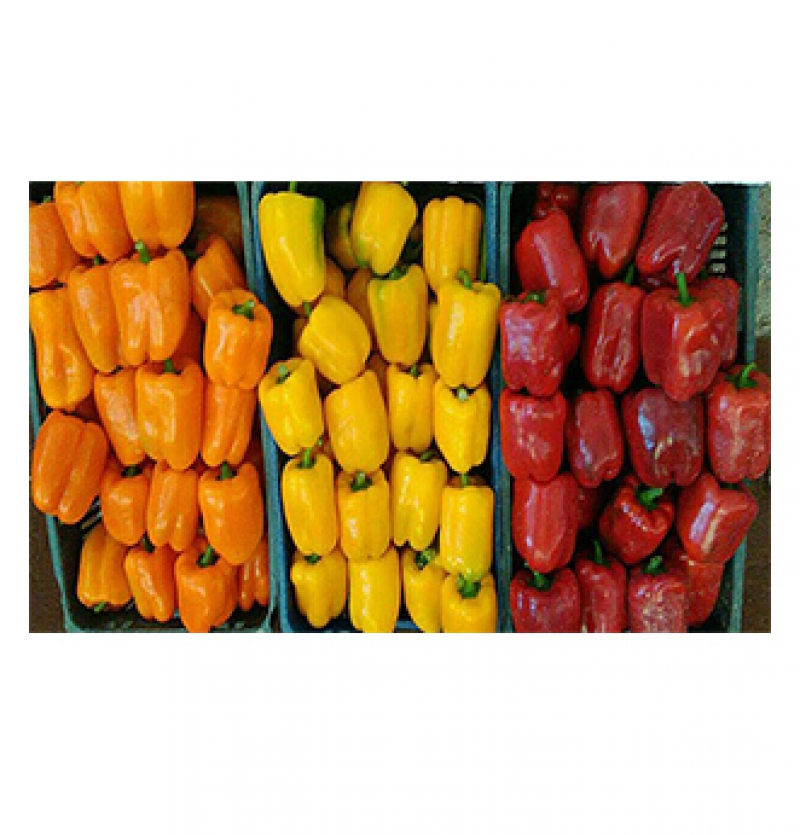 Iranian Sweet Peppers